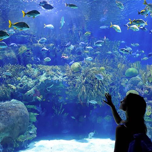 Acquario di cattolica il mare d 39 ammirare cattolica on for Blu di metilene acquario